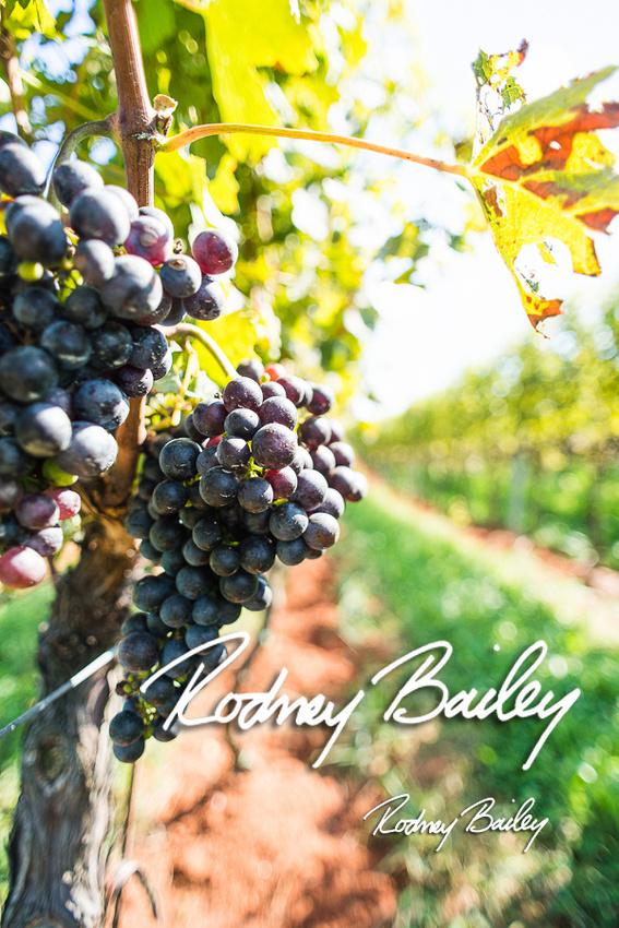 Virginia-Winery-Vineyard-Weddings-Ceremony-Reception-VA-Photographer_0008